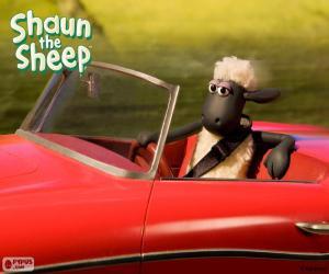 Układanka Shaun, prowadzenie samochodu