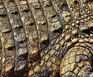 Układanka Skóra krokodyla