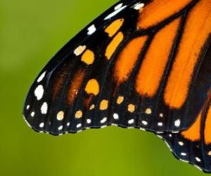 Układanka Skrzydeł motyla
