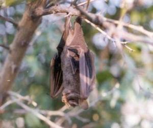 Układanka Snu Nietoperze zwisające z gałęzi