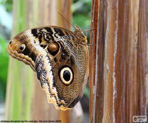 Układanka Sowa motyl
