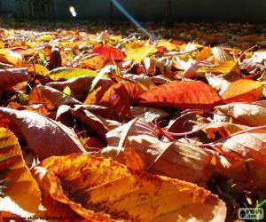 Układanka Suchych liści jesienią