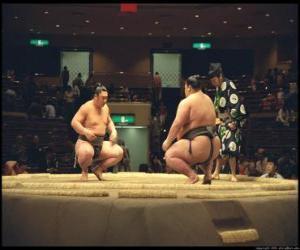Układanka Sumo