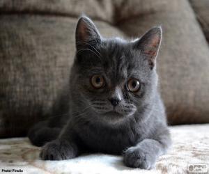 Układanka Szary kot