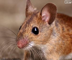 Układanka Szef myszy