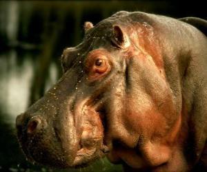 Układanka Szef z hipopotam nilowy