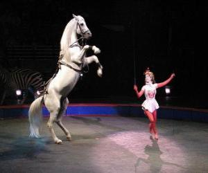 Układanka Tamer koni