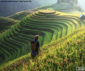 Układanka Tarasy ryżowe, Tajlandia