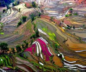 Układanka Tarasy z prowincji Yunnan, Chiny