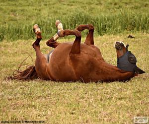 Układanka Tarzają się konia