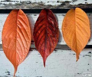Układanka Trzech liści jesienią