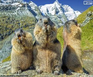 Układanka Trzy alpejskie świsłka