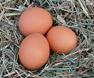 Układanka Trzy jaja
