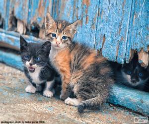 Układanka Trzy kocięta