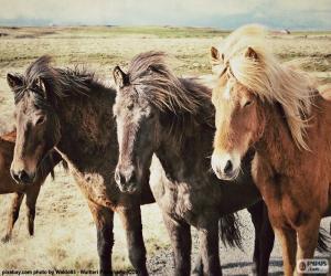 Układanka Trzy konie islandzkie