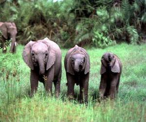 Układanka trzy małe słonie