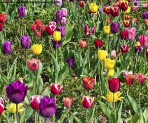 Układanka Tulipany
