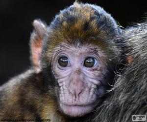 Układanka Twarz mały małpa