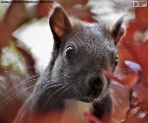 Układanka Twarz wiewiórka