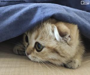 Układanka Ukryty kot
