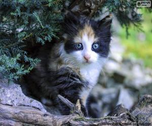 Układanka Ukryty kotek