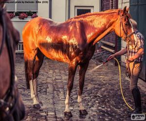 Układanka Umyć konia