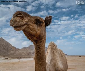 Układanka Wielbłąd na pustyni