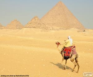 Układanka Wielbłąd przedniej piramidy