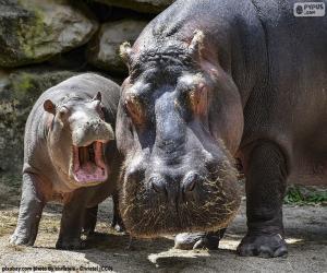 Układanka Wielki hipopotam obok ich hodowli