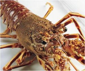 Układanka Wielki homar lub Homarus