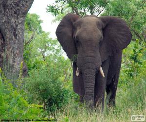 Układanka Wielki słoń w lesie