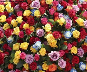 Układanka Wielobarwne róże
