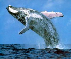 Układanka Wieloryb wyskoczył