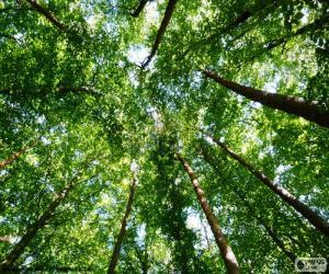 Układanka Wierzchołki drzew