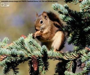 Układanka Wiewiórka pospolita na drzewie