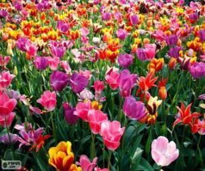 Układanka Wiosna
