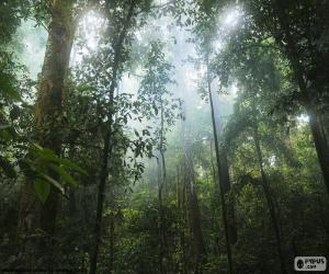 Układanka Wnętrze z dżungli