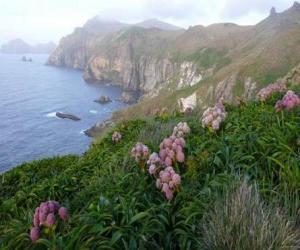 Układanka Wysp subantarctic, obejmujący wyspy Snares, Bounty, Antypodów, Auckland i Campbell, znajduje się w Oceanie Południowym, na południowy wschód od Nowej Zelandii.