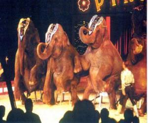 Układanka Wyszkolonych słoni