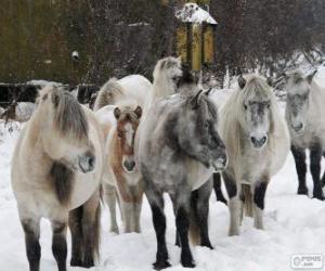 Układanka Yakutian koń pochodzących z Syberii