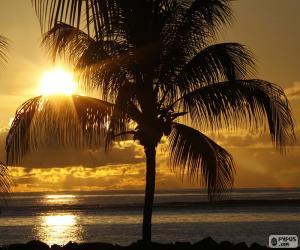 Układanka Zachód słońca, Palm