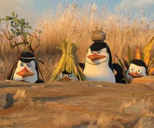 Układanka Zakamuflowany Penguins