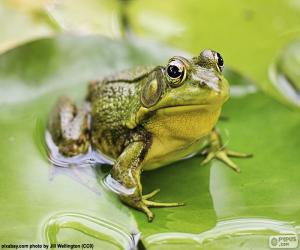 Układanka Zielona żaba