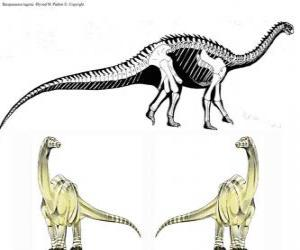 Układanka Zizhongosaurus, Zizhongozaur - prymitywny dinozaur z grupy zauropodów znaleziony w Chinach.