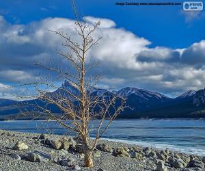 Układanka Zmarłe drzewo w pobliżu jeziora