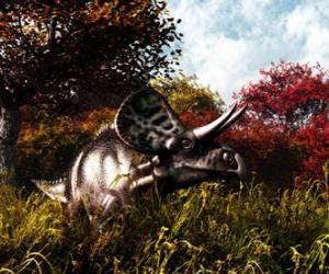 Układanka Zuniceratops było około 3 do 3,5 metra długości i 1 metr wysokości.