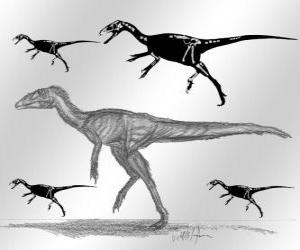 Układanka Zuolong, który żył w późnym okresie jury, około 160 milionów lat temu w Azji, co jest teraz