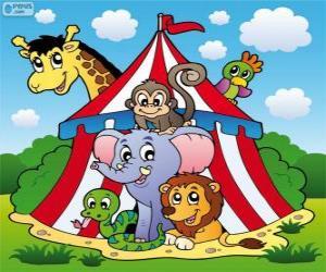 Układanka Zwierzęta cyrkowe