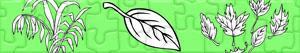 Puzzle Rośliny i Liście